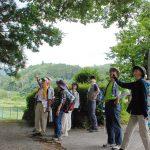 吉田神社の欅の大木見上げ、意見百出(個人の感想です!)