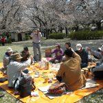 中﨑さんの音頭により乾杯し観桜の宴の開始