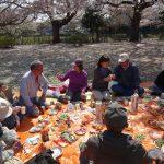 観桜の宴開始