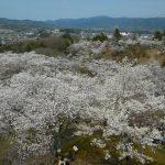西山公園展望台より太田市街を望む
