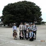 日立市巨木指定:百年の歴史を見守っている久慈小学校のケヤキ