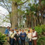 岡田記念館 巨木をバックで