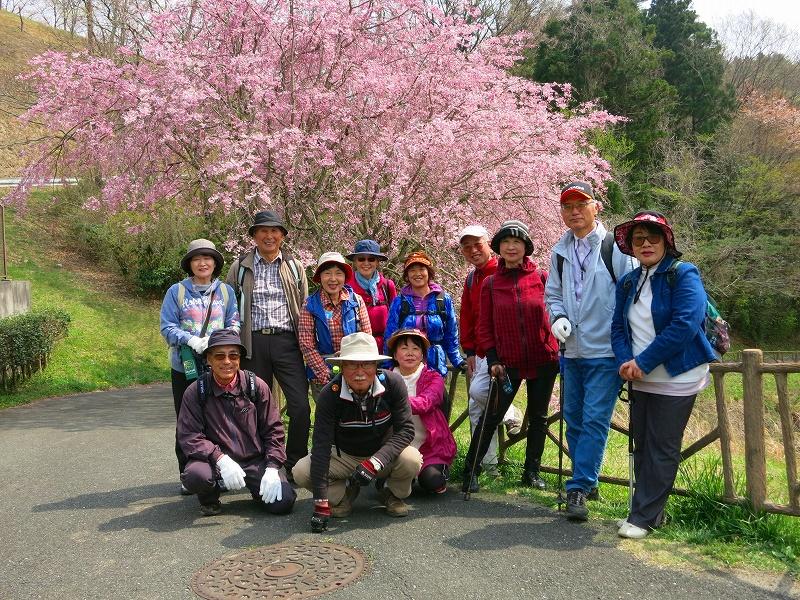 十王ダム堰堤に咲き誇る「八重紅枝垂桜」の前で笑顔で記念撮影